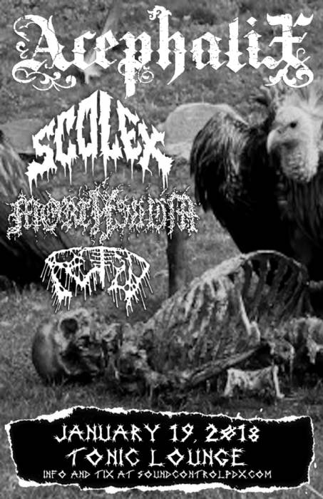 Acephalix / Scolex